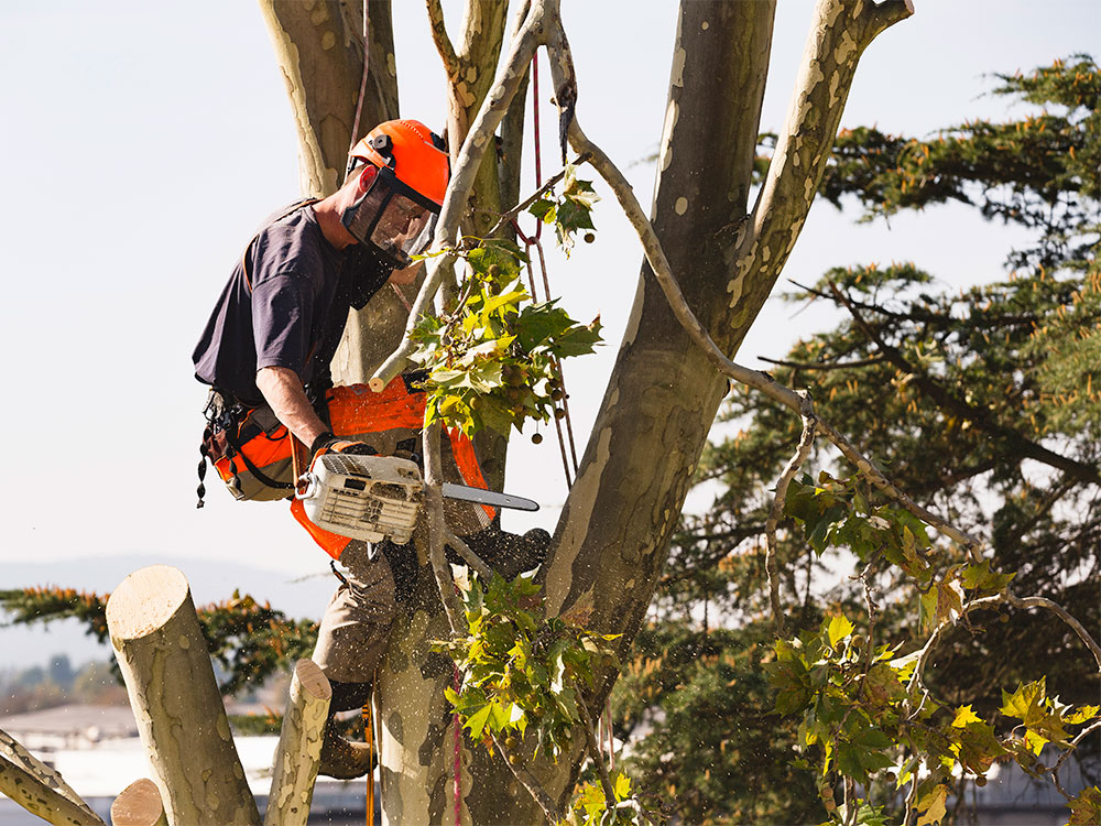 Commercial Tree Pruning Calgary