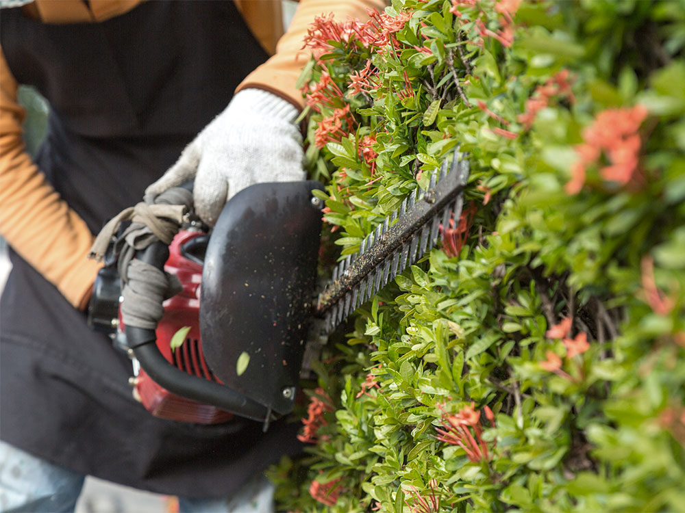 Condo Pruning and Trimming Calgary